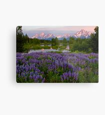 Field of Lupine and the Tetons Metal Print