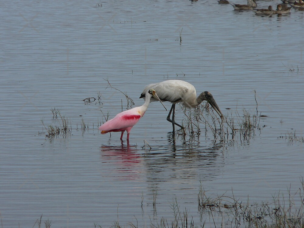 Spoonbill And Woodstork by kevint