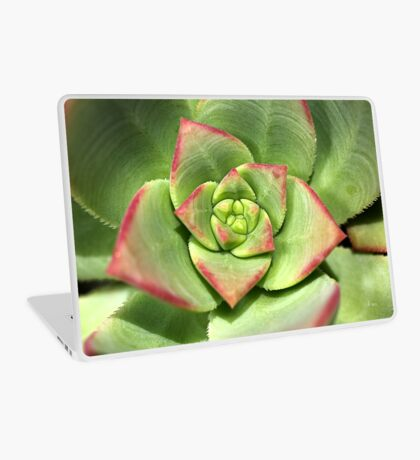 Hens And Chicks Succulent Laptop Skin
