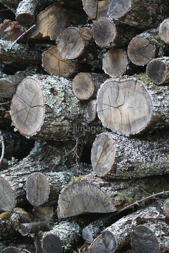 Load of Old Logs! by jcjimages