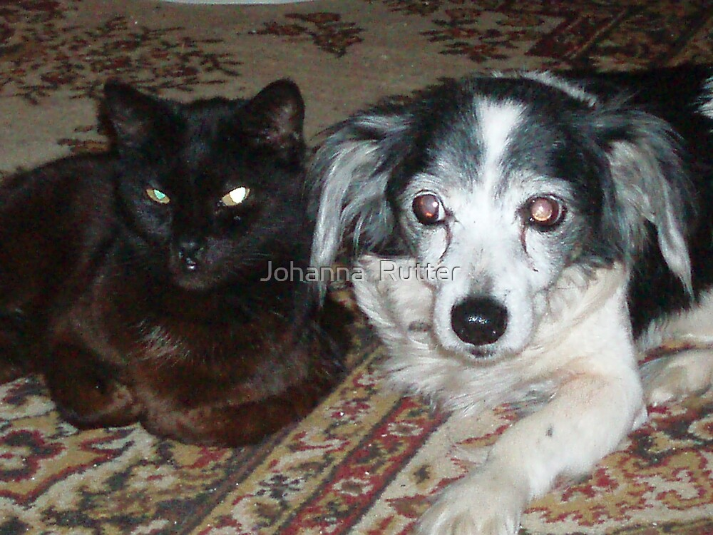 my dog and cat posing by Johanna  Rutter