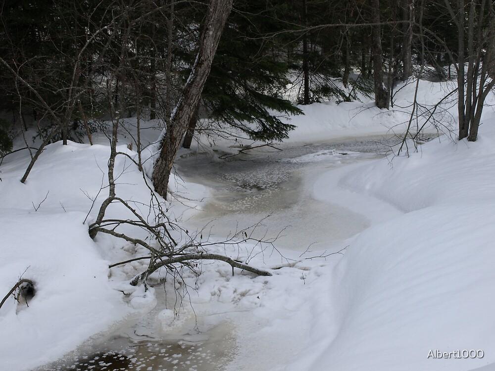 NC along Humphreys brook trail by Albert1000