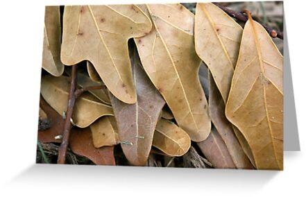 Water Oak Leaves by rdshaw