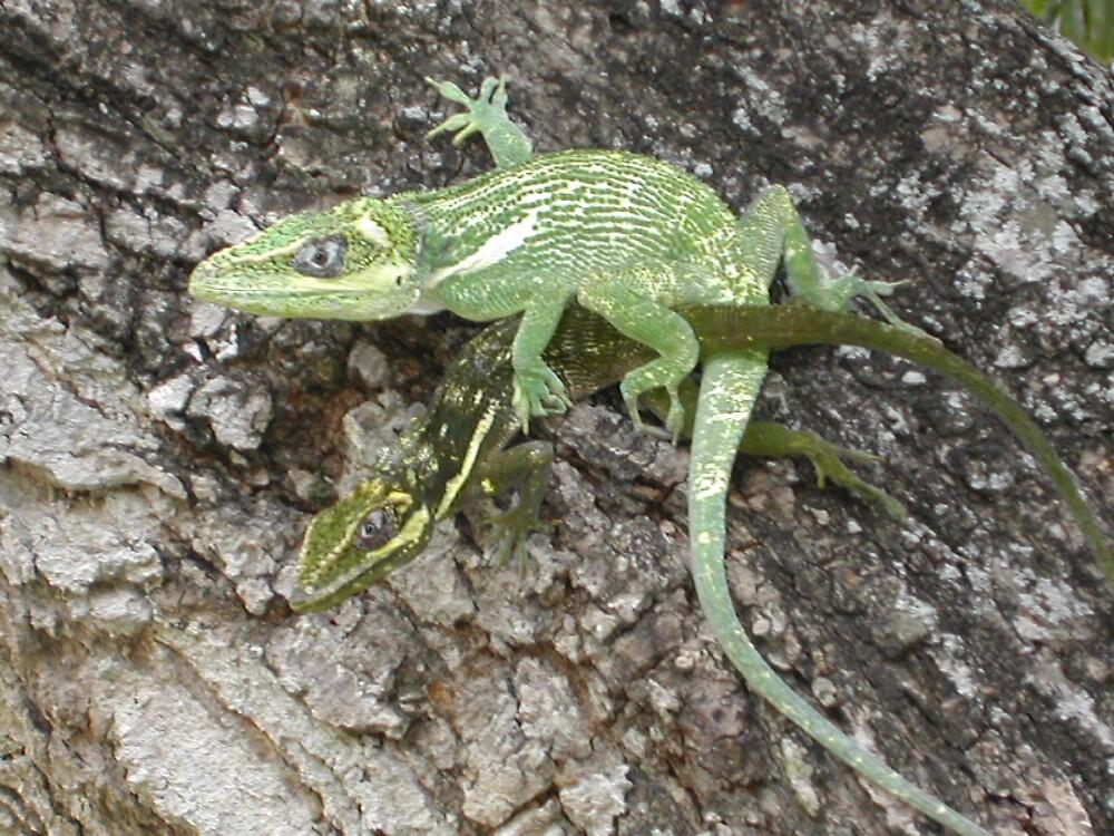 lizard luv by keg13