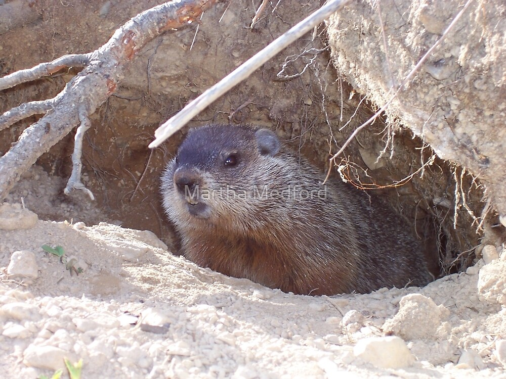 Mama Groundhog by Martha Medford