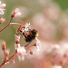 """"""" Bumbling In Soft Pink """" by Richard Couchman"""