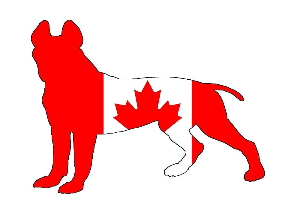 Pit Bull Terrier - Canada by DelirusFurittus