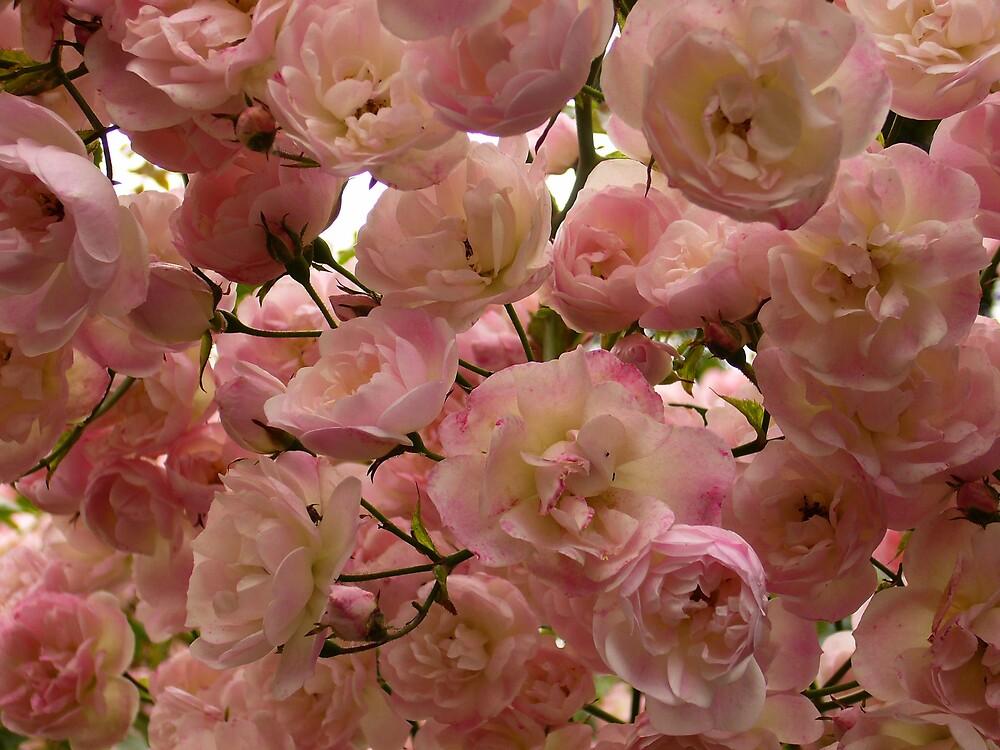 Pretty in pink by irisdesign