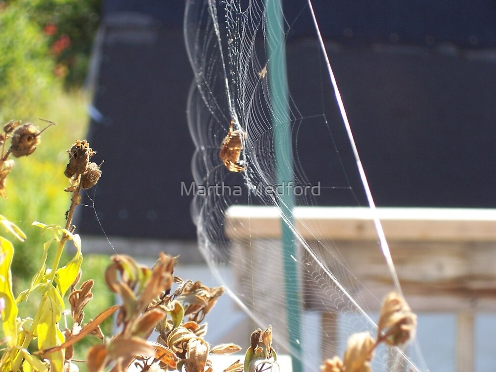 Spider Web In Breeze by Martha Medford