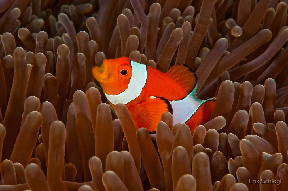 Nemo's Cry by Erik Schlogl