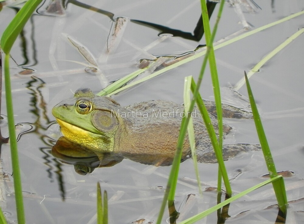 Bull Frog by Martha Medford