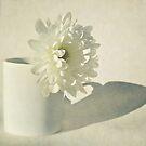 Chrysanthemum Shadow. by Lyn  Randle