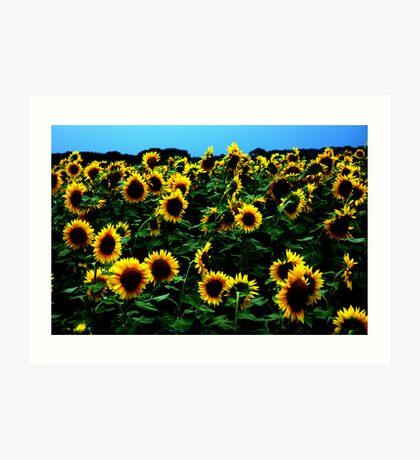 Simply Sunflowers Art Print