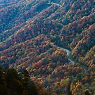 Autumn in the Smoky Mountains by dlhedberg