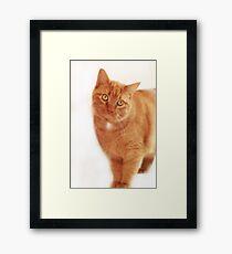 Morris Look-a-Like Framed Print