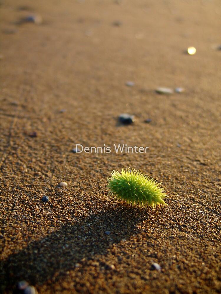 Stranger on the Sand by Dennis Winter