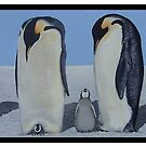 Emperor Penguins with chicks by Andy  Housham