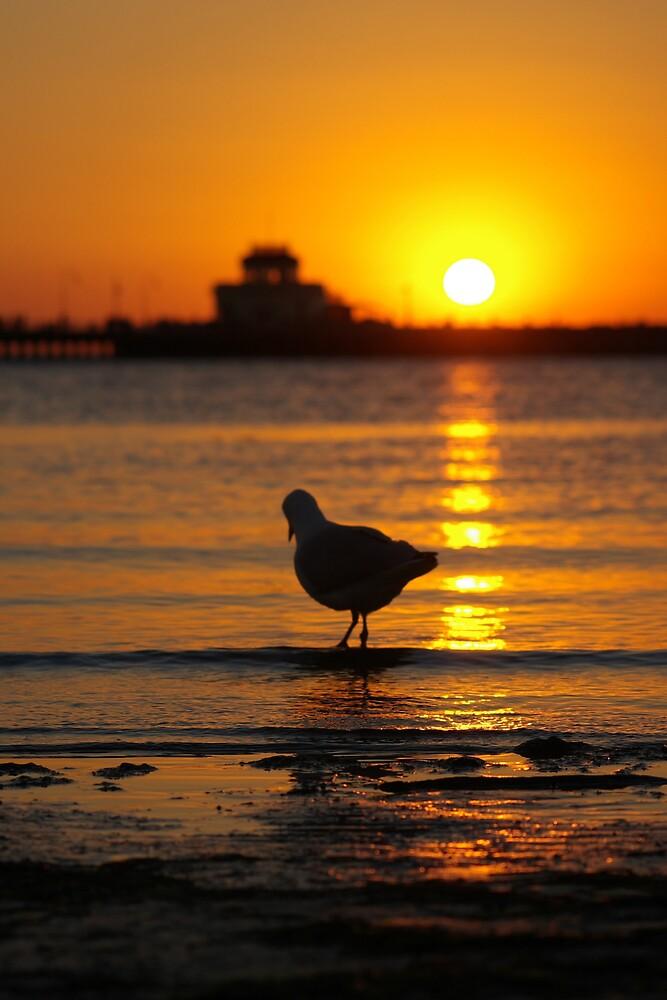 St Kilda Sunset by jcmorley
