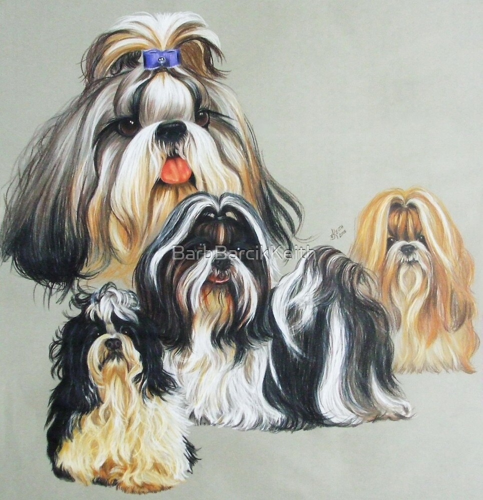Shih Tzu Collage by BarbBarcikKeith