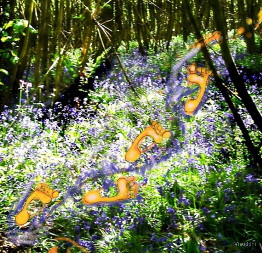Footprints in a Bluebell Wood by Visuddhi