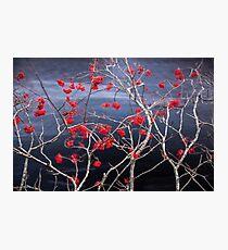 River berries Photographic Print