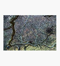Thicket Photographic Print
