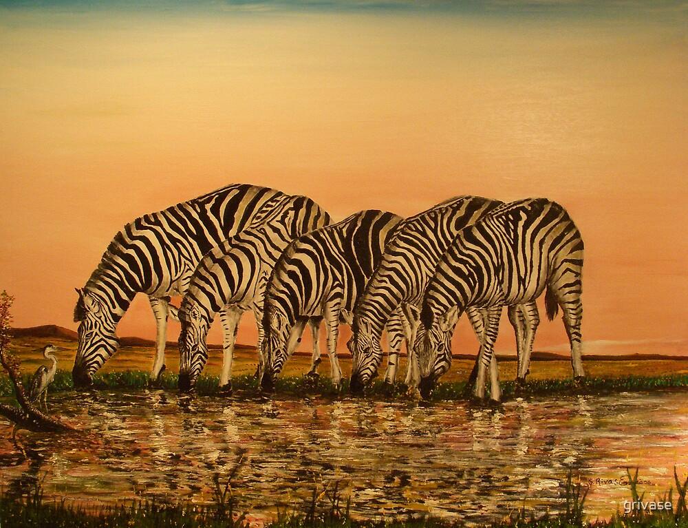 Zebras by grivase