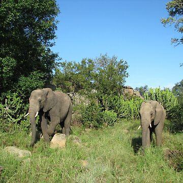 Elephants 2 by shawnzahavi