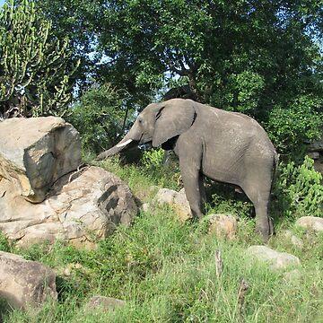 Elephants 3 by shawnzahavi