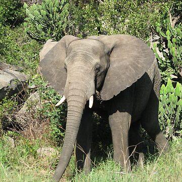 Elephants 4 by shawnzahavi