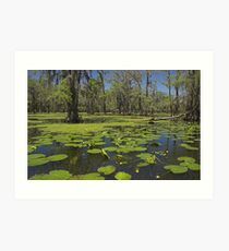 Cypress Swamp Art Print