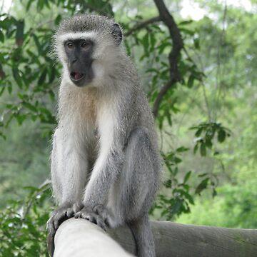 Monkey 3 by shawnzahavi
