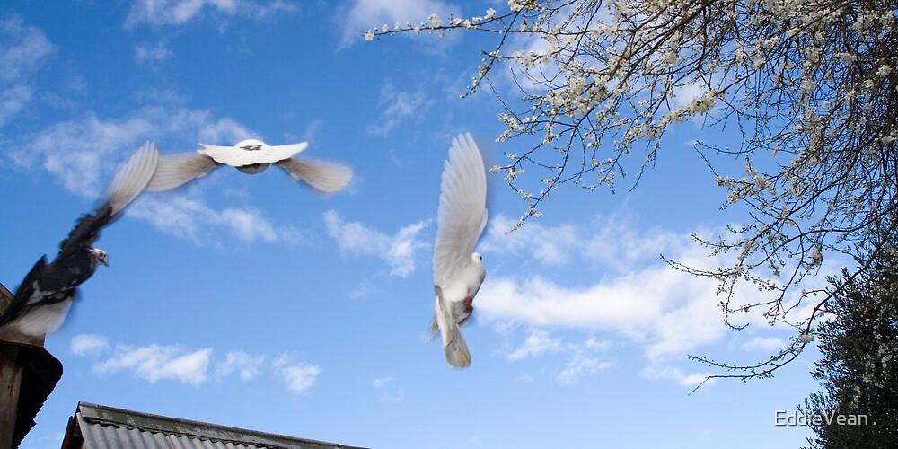 Birds In Flight by EddieVean .