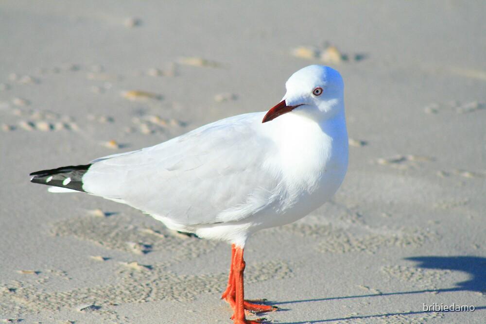 Seagull by bribiedamo