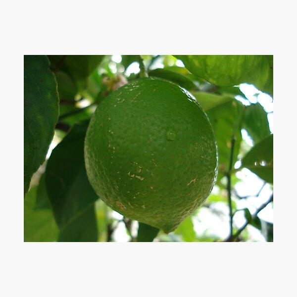 green lemon Photographic Print