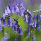 Bluebell Arch by Avril Harris