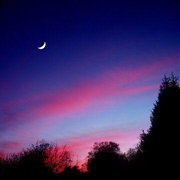 Garden Moon by Sherif