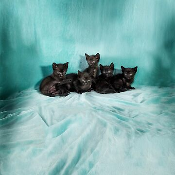 Five kittens turquose by jo-twinflame