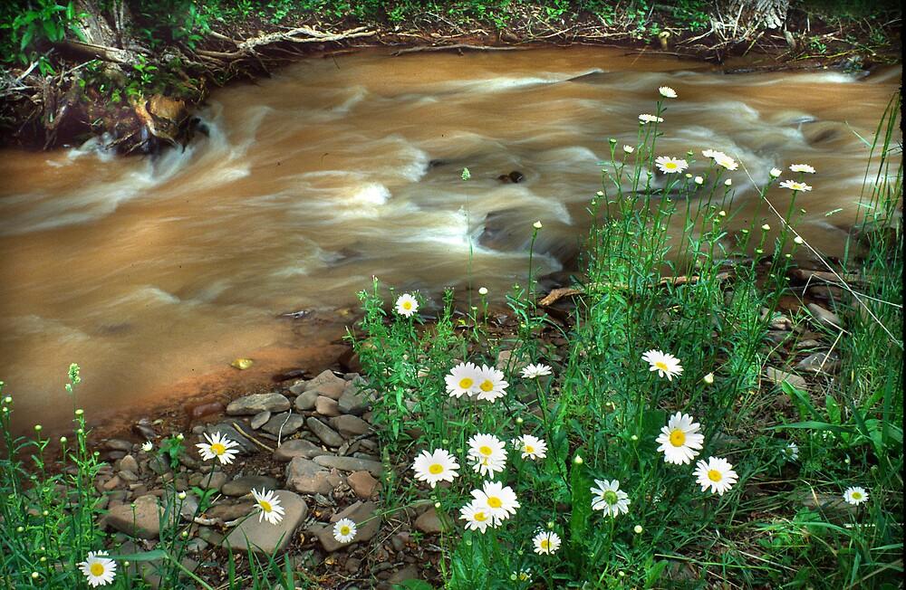 Springtime by Steve  Taylor
