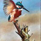 Kingfisher by zooreka