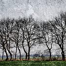 These are trees by Kurt  Tutschek