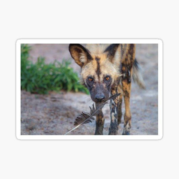 Wild Dog's Prized Feather Sticker