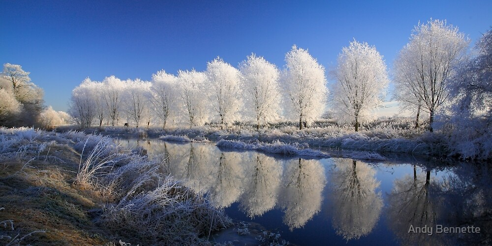 Mirror Trees by Andy Bennette
