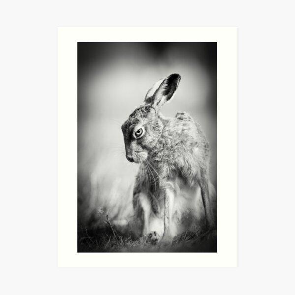Dark Hare Art Print