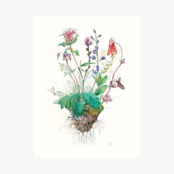 Wildlfowers Art Print
