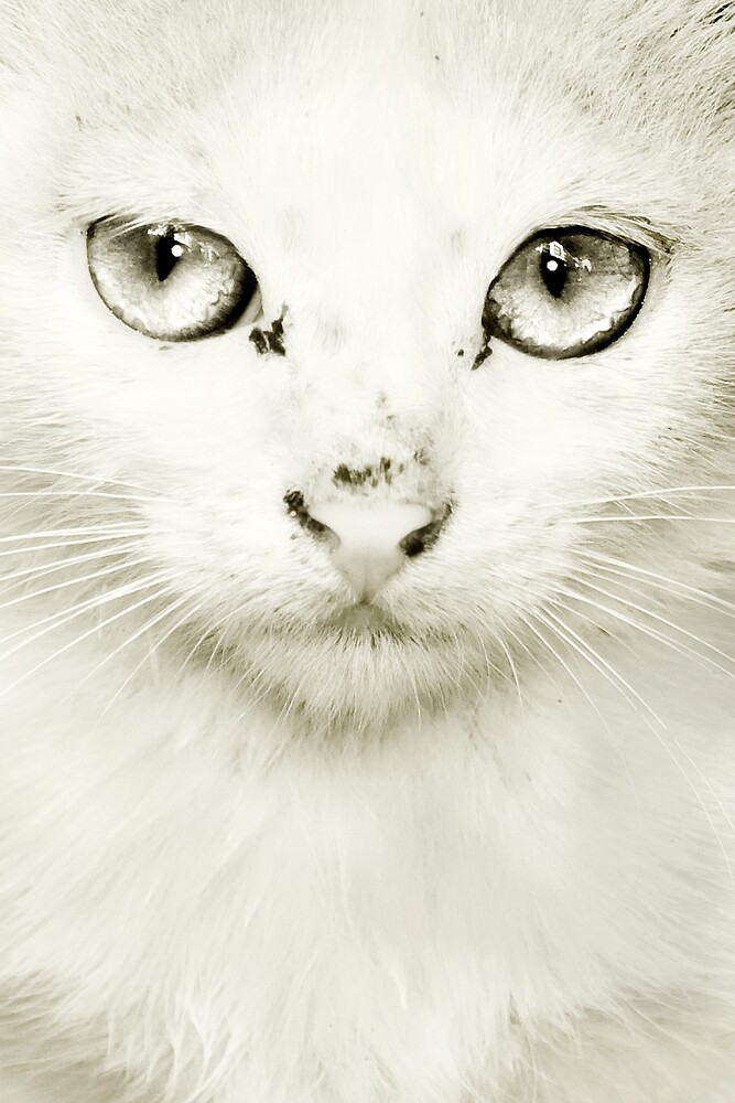 The cat's eye by Åsta Skjervøy