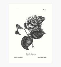 "No. 2 "" The Camellia"" Botanical Ballpoint Pen Drawing Art Print"