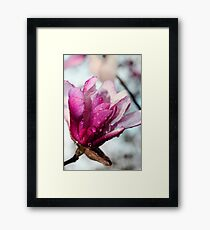One Pink Magnolia Framed Print