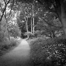 Wonderland by David Lamb