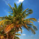 Coconut Trees by photorolandi